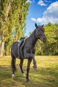 Mooi zwart paard bevindt zich op zijn achterste benen in aard