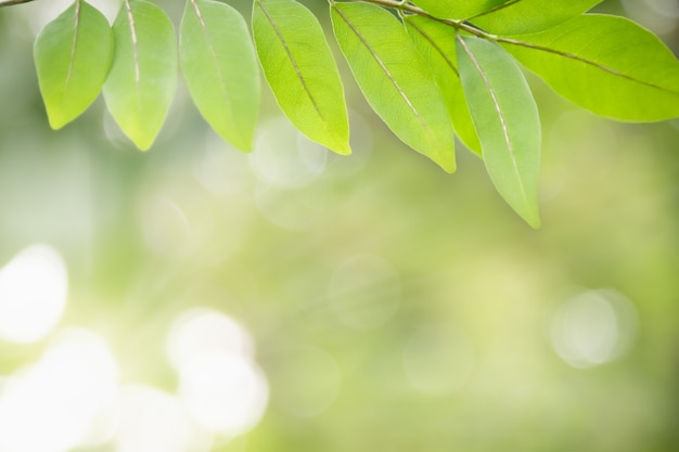 Mooie aantrekkelijke aardmening van groen blad op vaag groen in tuin met exemplaar het ruimte gebruiken als natuurlijk groen installatieslandschap, ecologie, vers behangconcept.