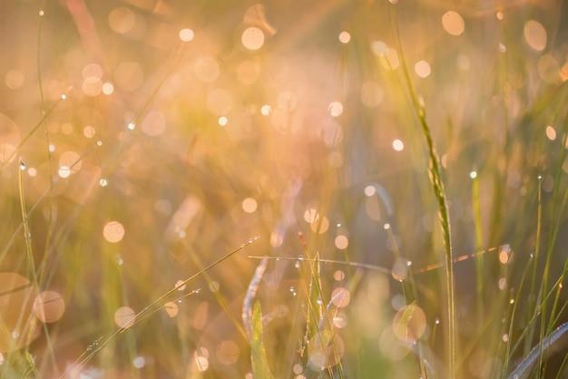 Mooie achtergrond met ochtenddauw op gras