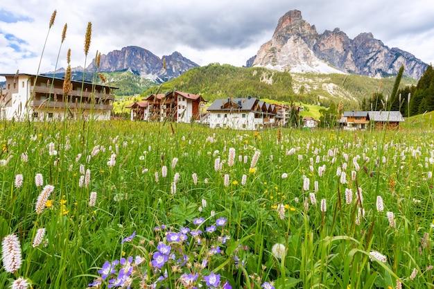 Mooie alpenweide met een verscheidenheid aan wilde bloemen in de italiaanse alpen