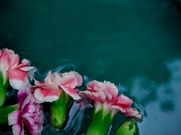 Mooie anjers op water achtergrond