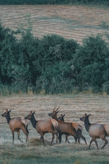 Mooie antilopekudde die in een brownfield loopt