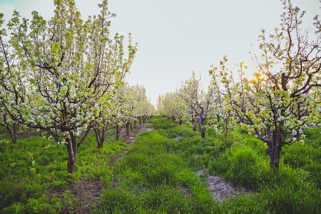 Mooie appelboomtak met zon