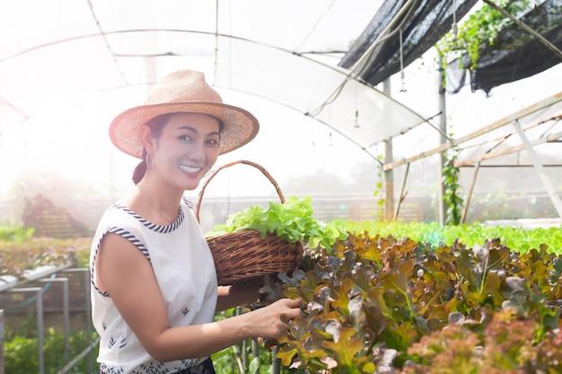 Mooie aziatische vrouw het plukken saladegroenten in hydroponicslandbouwbedrijf