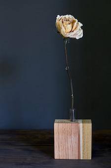 Mooie beige droog nam in een houten vaas op een donkere achtergrond toe, selectieve nadruk