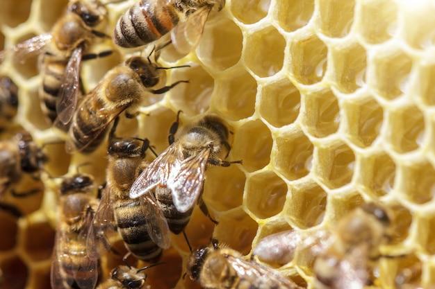Mooie bijen op honingraten met honing close-up