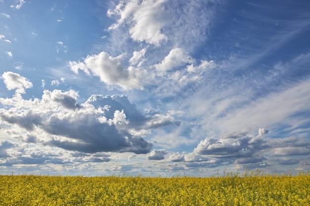 Mooie blauwe hemel met witte wolken boven het koolzaadveld