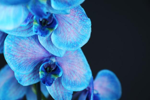Mooie blauwe orchideebloem op zwarte achtergrond