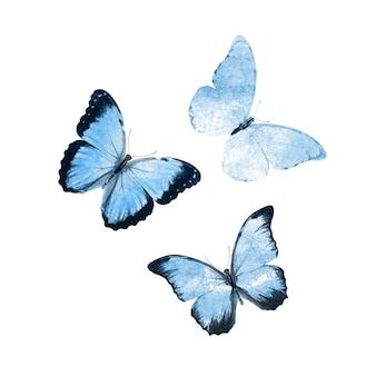 Mooie blauwe tropische vlinders geïsoleerd op een witte achtergrond. motten voor ontwerp
