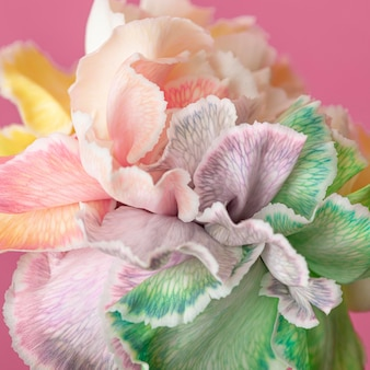 Mooie bloeide bloemclose-up
