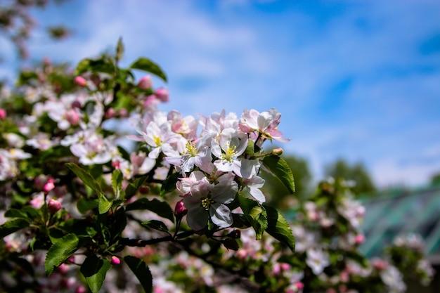 Mooie bloeiende bloem in de tuin, zomer achtergrond. fotografie magische bloem op onscherpe achtergrond