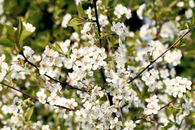 Mooie bloeiende bloem