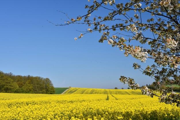 Mooie bloeiende fruitboomtak. gele bloeiende velden, grondweg en prachtige vallei, nat