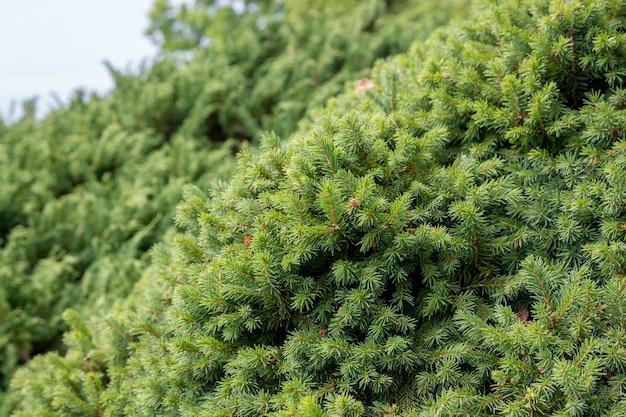 Mooie bloeiende groene flora in de tuin, zomer achtergrond. fotografie magische bloemblaadjes op onscherpe achtergrond