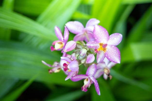 Mooie bloeiende orchideeën in bos