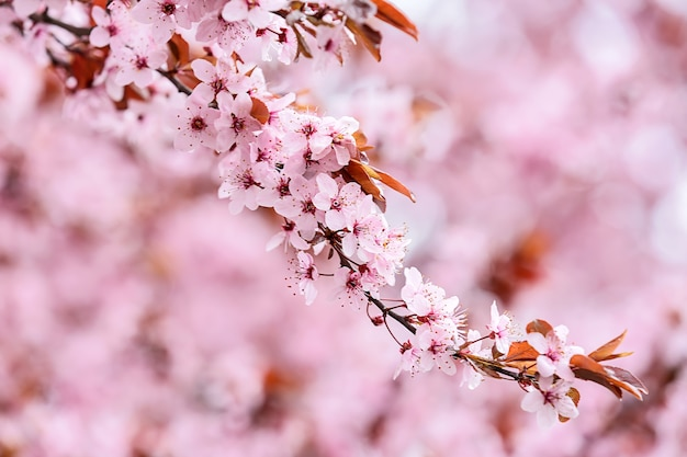 Mooie bloeiende tak op wazig oppervlak