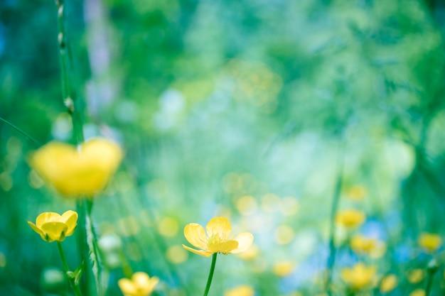 Mooie bloeiende zomer abstracte achtergrond