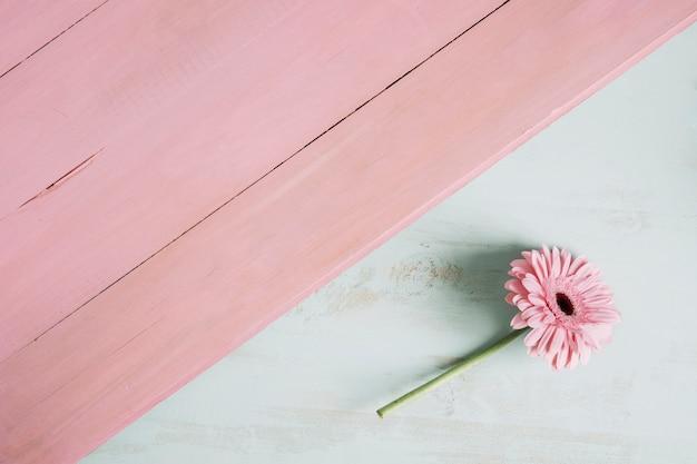 Mooie bloem dichtbij roze oppervlakte
