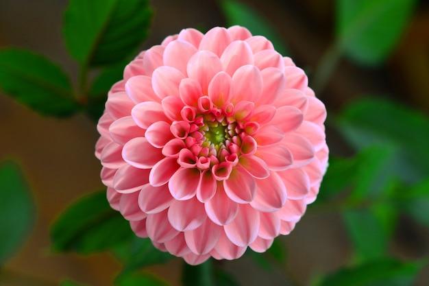 Mooie bloem die in de tuin bloeit