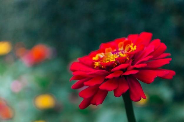 Mooie bloem met veel bloemblaadjes en verschillende planten wazig op de achtergrond