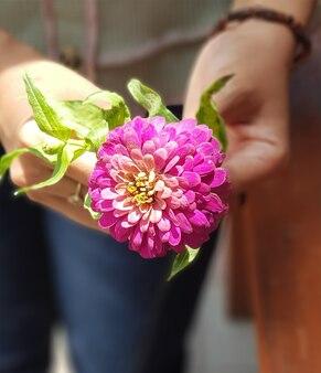 Mooie bloem zinnia zonnebloem