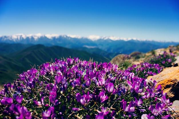Mooie bloemen bovenop de bergen