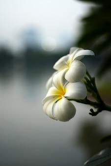 Mooie bloemen en groene bladeren. groene bladeren met mooi zonlicht gebruikt als achtergrondafbeelding.
