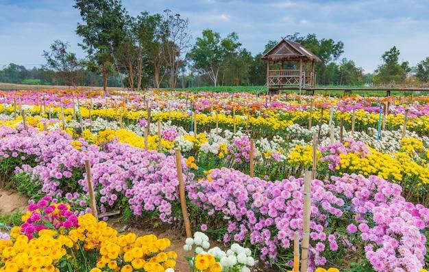 Mooie bloemen in de tuin Premium Foto