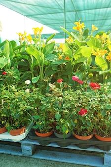 Mooie bloemen in potten dichtbij winkel