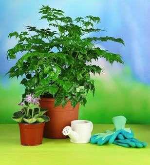 Mooie bloemen in potten op houten tafel op natuurlijk
