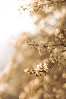 Mooie bloemen lente abstracte natuur scène met bloeiende kersenboom in zonlicht. zachte selectieve focus