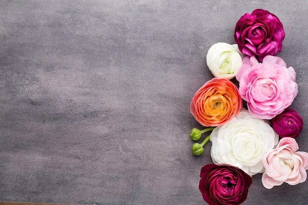 Mooie bloemen, meer gekleurde ranonkels op grijs. plat leggen
