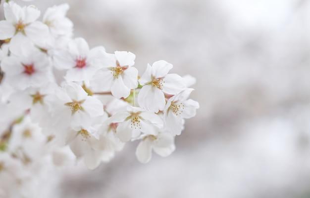 Mooie bloemen op een tak