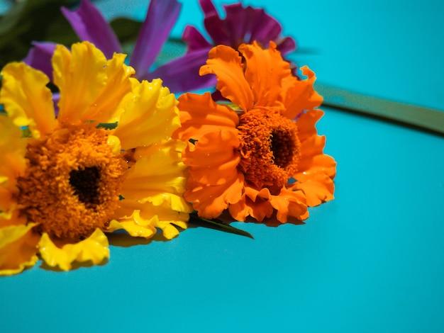 Mooie bloemen op gekleurde achtergrond met plaats voor tekst