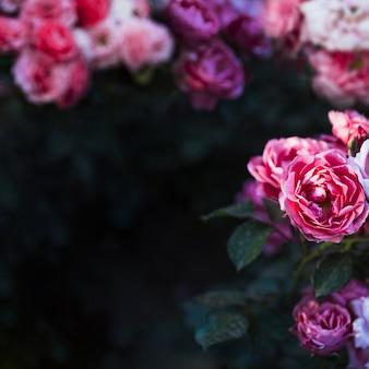 Mooie bloemen op struik