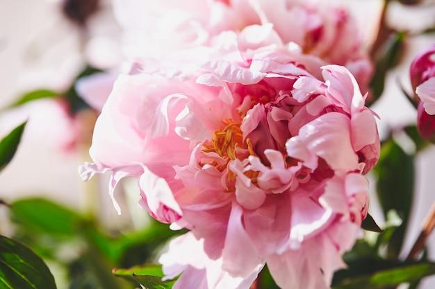 Mooie bloemen pioenrozen boeket roze pioenroos