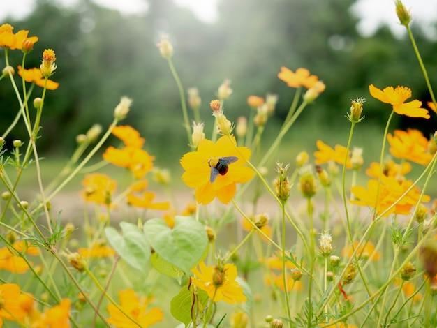 Mooie bloemen tuin achtergrond. gele bloemen buitentuin en hemelachtergrond met kopieerruimte.