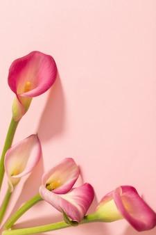 Mooie bloemen van calla lelie op papier oppervlak