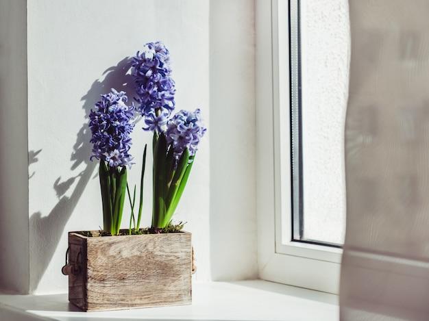 Mooie bloemen van hyacint in een houten kist