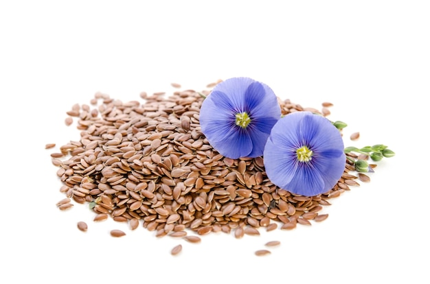 Mooie bloemen van vlas met zaden