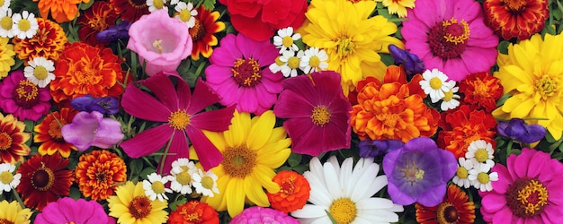 Mooie bloemen voor groet of ansichtkaarten.