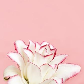 Mooie bloemen wenskaart met witte pioen lelie. inschrijving bloemblaadjes close-up.