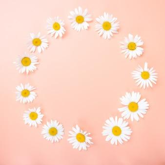 Mooie bloemige compositie met kamillebloemen wilde bloemen zachte lichte kleur
