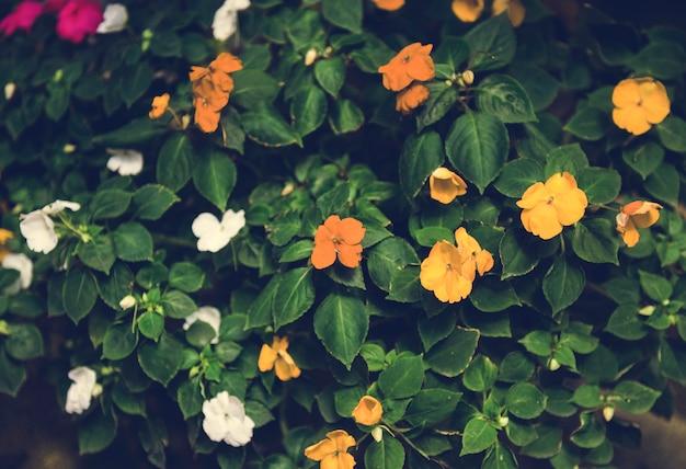 Mooie bloesem kleurrijke bloemen achtergrond