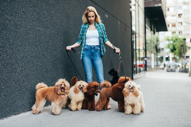 Mooie blonde vrouw van middelbare leeftijd wandelt graag met haar schattige miniatuurpoedels