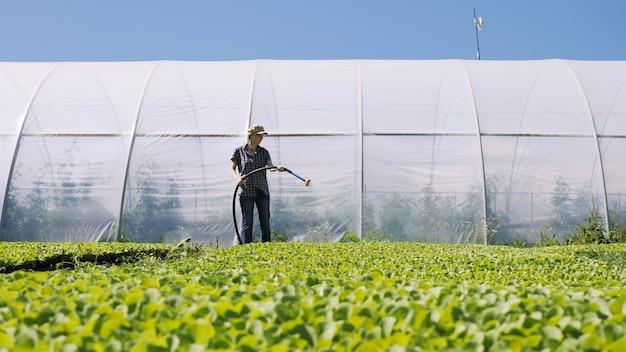 Mooie boer irrigeert groene jonge zaailingen op het veld in de buurt van de kas