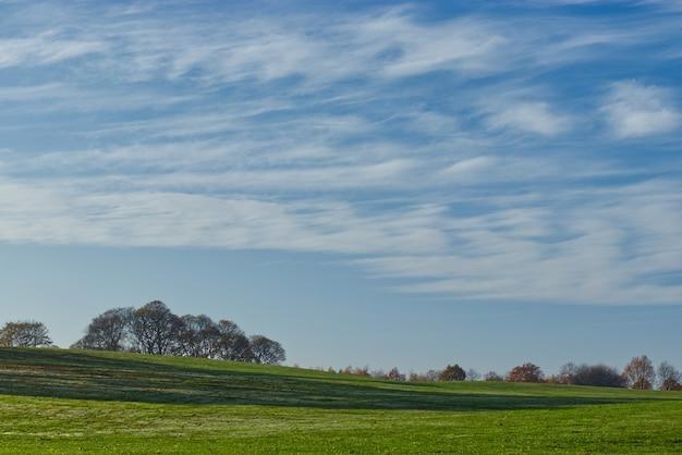 Mooie bomen op de met gras bedekte heuvel onder de wolken aan de hemel