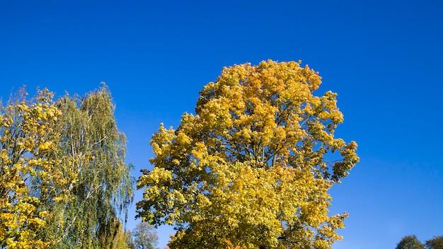 Mooie boomtoppen in de herfstbladval