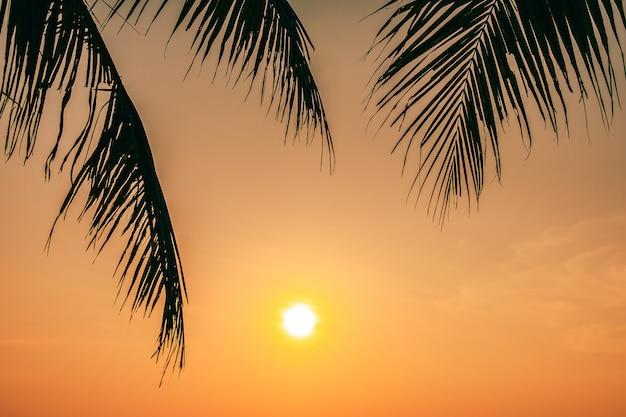 Mooie buitenaard met kokosnotenblad met zonsopgang of zonsondergangtijd