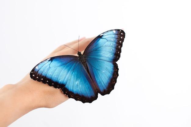 Mooie butterfly morpho zit op de hand van een vrouw met een neutrale manicure. witte achtergrond. een plek voor tekst. schoonheid. huidsverzorging. hoge kwaliteit foto